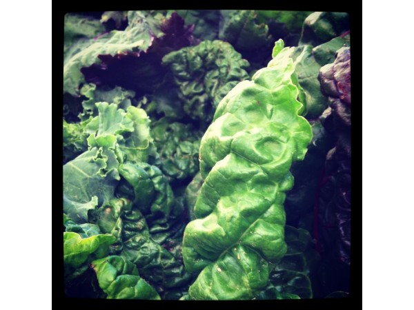 Mamaroneck winter farmers market larchmont ny patch for Eastchester fish market