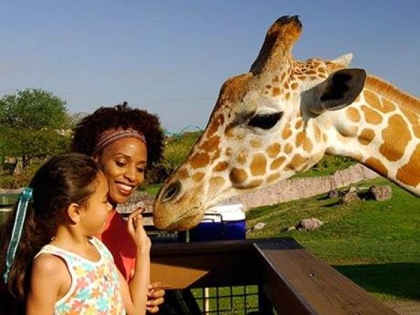 Icymi Free Preschool Pass Back At Busch Gardens Seaworld New Tampa Fl Patch