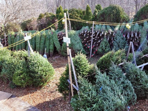 Residents: Put Out Christmas Trees on Recycling Days - Farmingdale ...