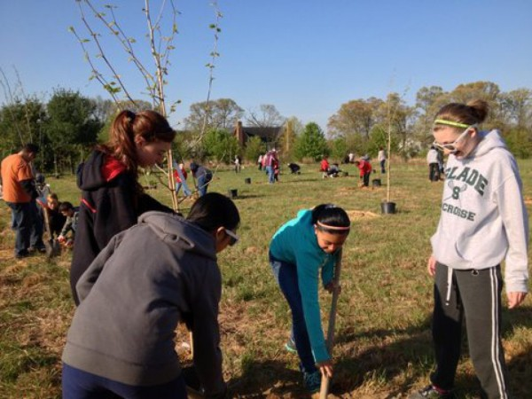 Maryland Department Of Natural Resources Forest Service Gift Of Trees
