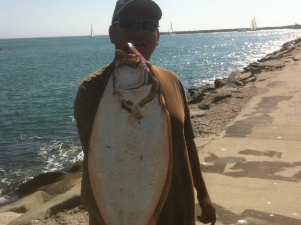Fishing report island yellowtail and halibut in the surf for Catalina island fishing report