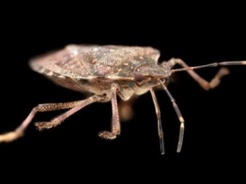 Stink Bug Season Is Back: Here's How To Get Rid Of Them