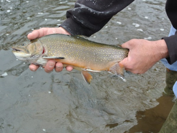 Ramapo river stocked with trout photos ridgewood nj patch for Trout fishing nj