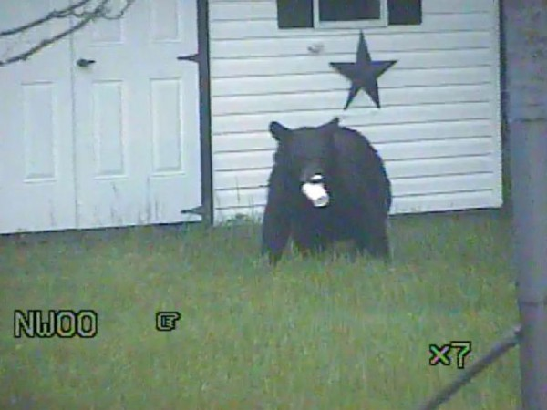Updated black bear spotted in lawrence township for Mercedes benz of princeton lawrence township nj