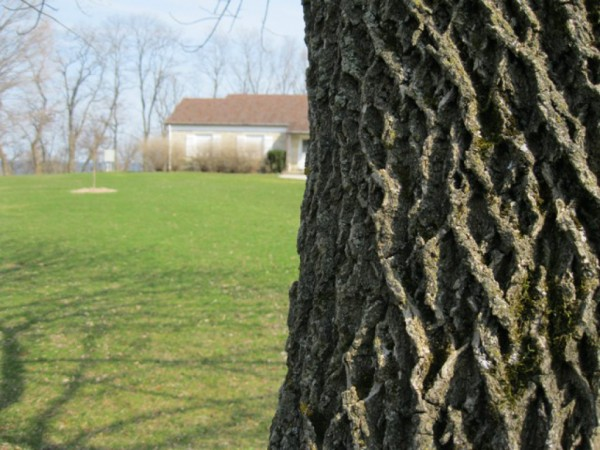 Emerald Ash Borer Plan to Cost $50K - Fox Point, WI Patch