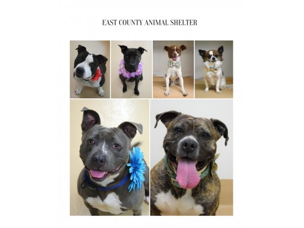 Tri Valley Animal Rescue Offering Free Pets To Qualified