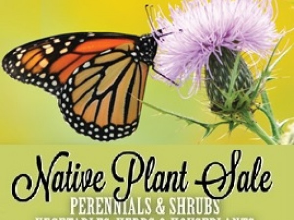 Native Plants Vegetables Amp Herb Sale Stamford Ct Patch