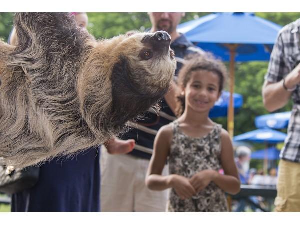 Summer Nights At Brookfield Zoo