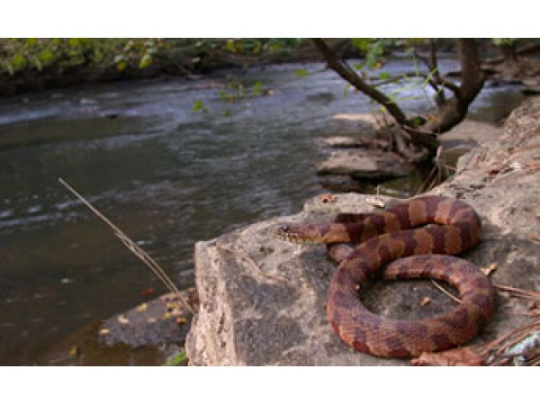 Snake sightings announced at lake avondale midtown ga patch for Avondale lake house