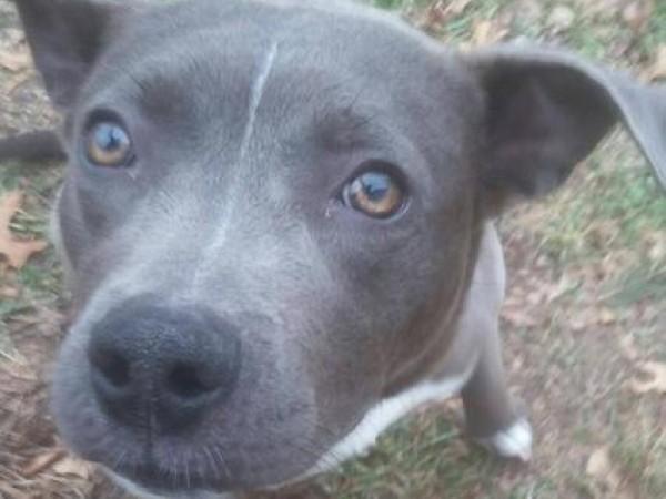 Dogs For Adoption At Jjc Vet Tech Open House Joliet Il
