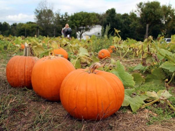 The Pumpkin Patch - South Brunswick, NJ Patch