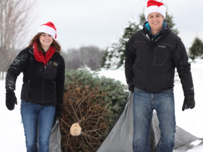 Find Christmas Tree Farms Near Crystal Lake, Cary
