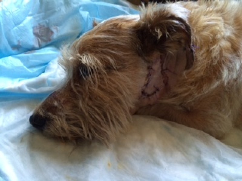 Dog Owner Speaks Out After Fisher Cat Attack - Ledyard, CT Patch