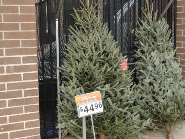 Five Places To Buy Christmas Trees