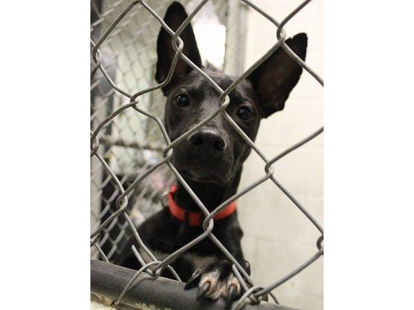 Buddy Dog Holds Pet Adoption Event At A J Rose Carpets