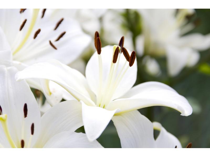 In Loving Memory of Carolyn Grogan Townsend, 77 | Cumming, GA Patch