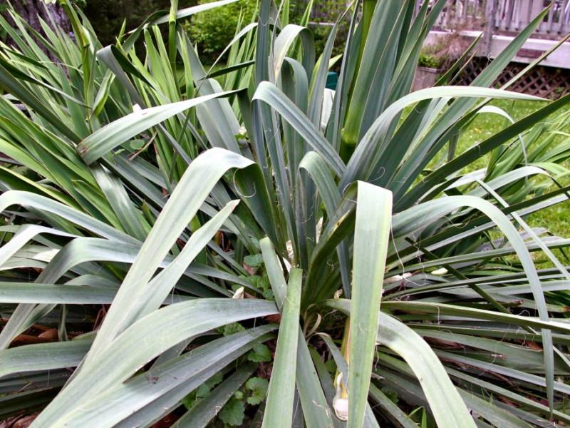 Emmaus Community Garden