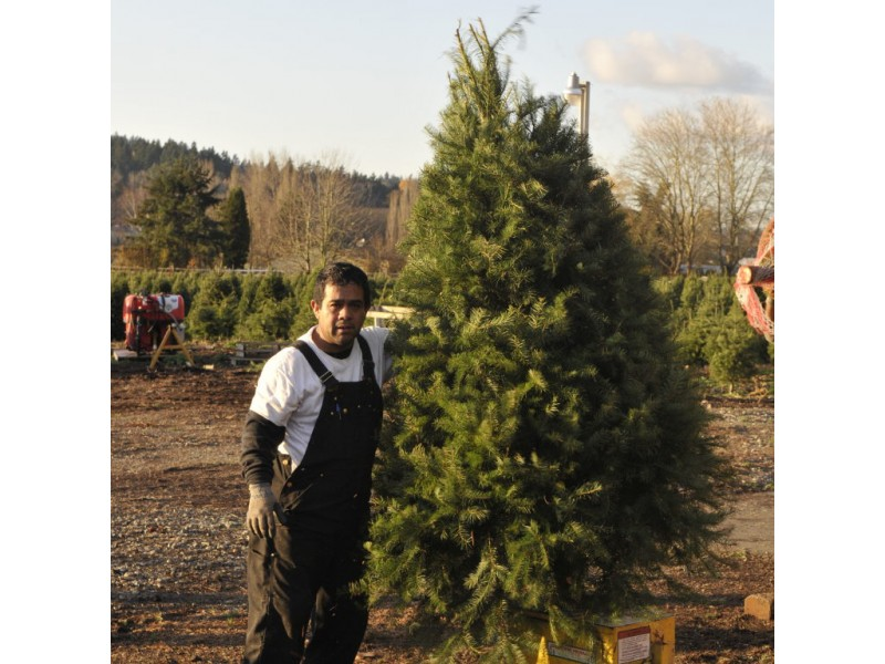 Holiday Guide: Where To Cut Your Own Christmas Tree