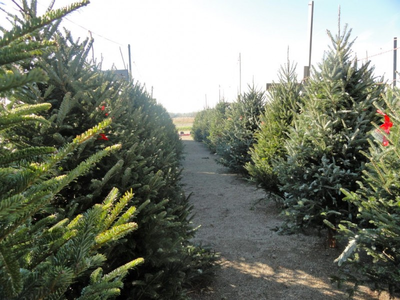 Where To Get Your Christmas Tree Avon Avon Lake Oh Patch