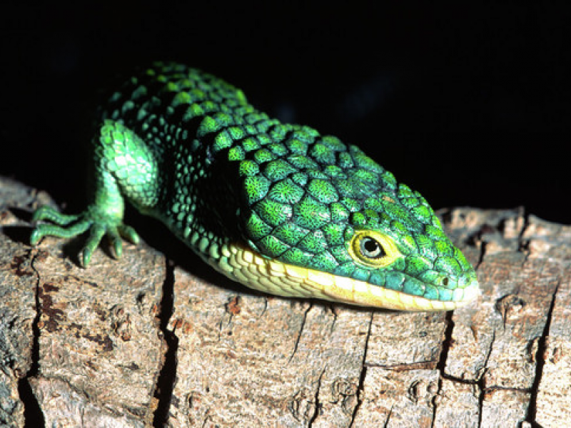 North American Reptile Breeders Conference & Trade Show | Homewood