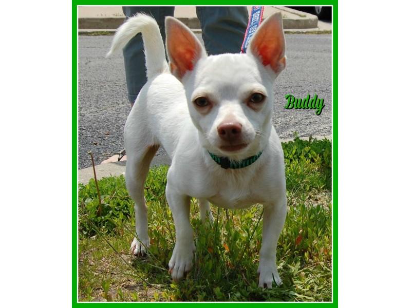 Dog Adoption Bolingbrook Il