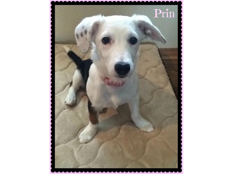 Dog Adoption Geneva