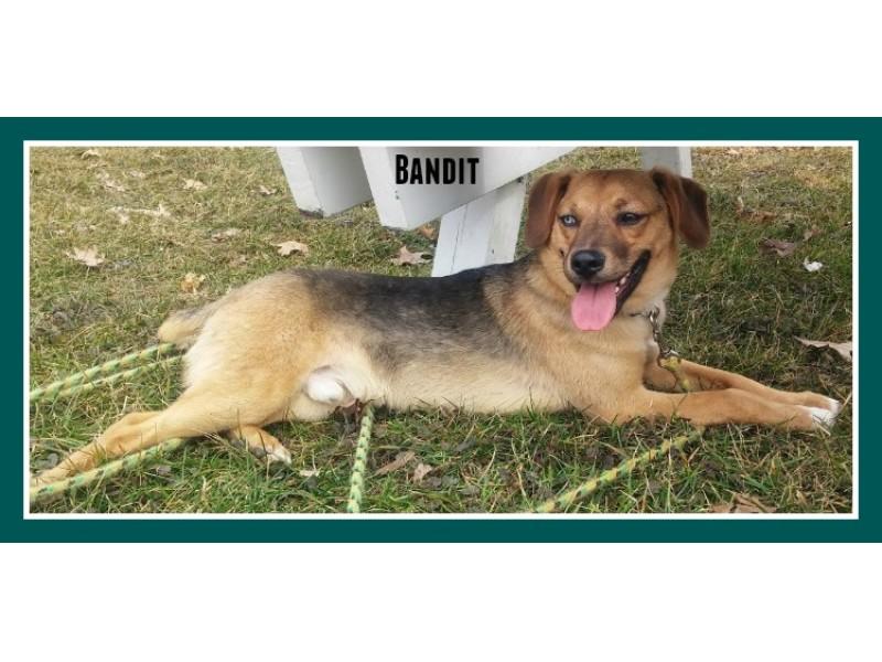 Elgin Dog Rescue