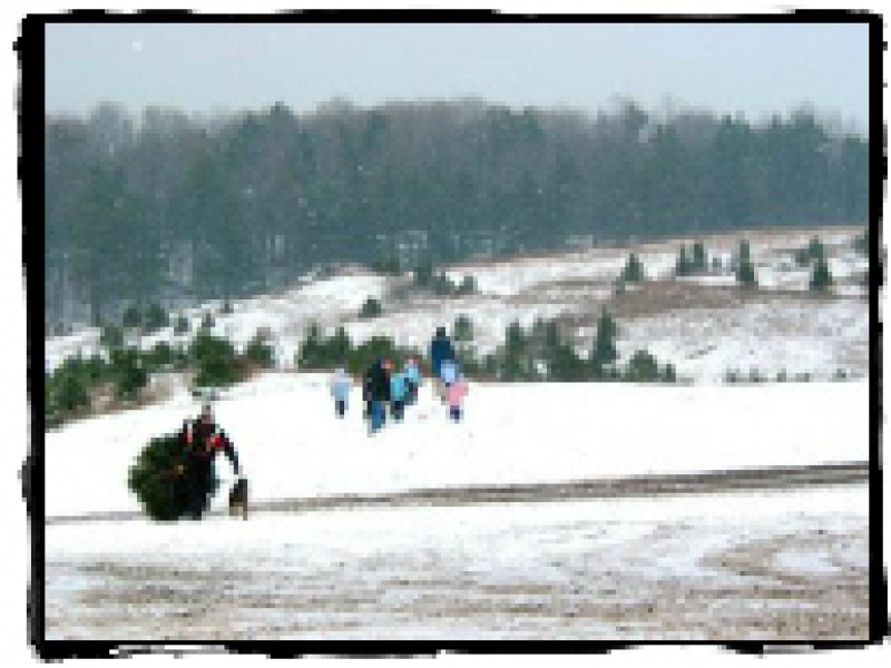 Find a Christmas tree at a Connecticut Christmas tree farm ...