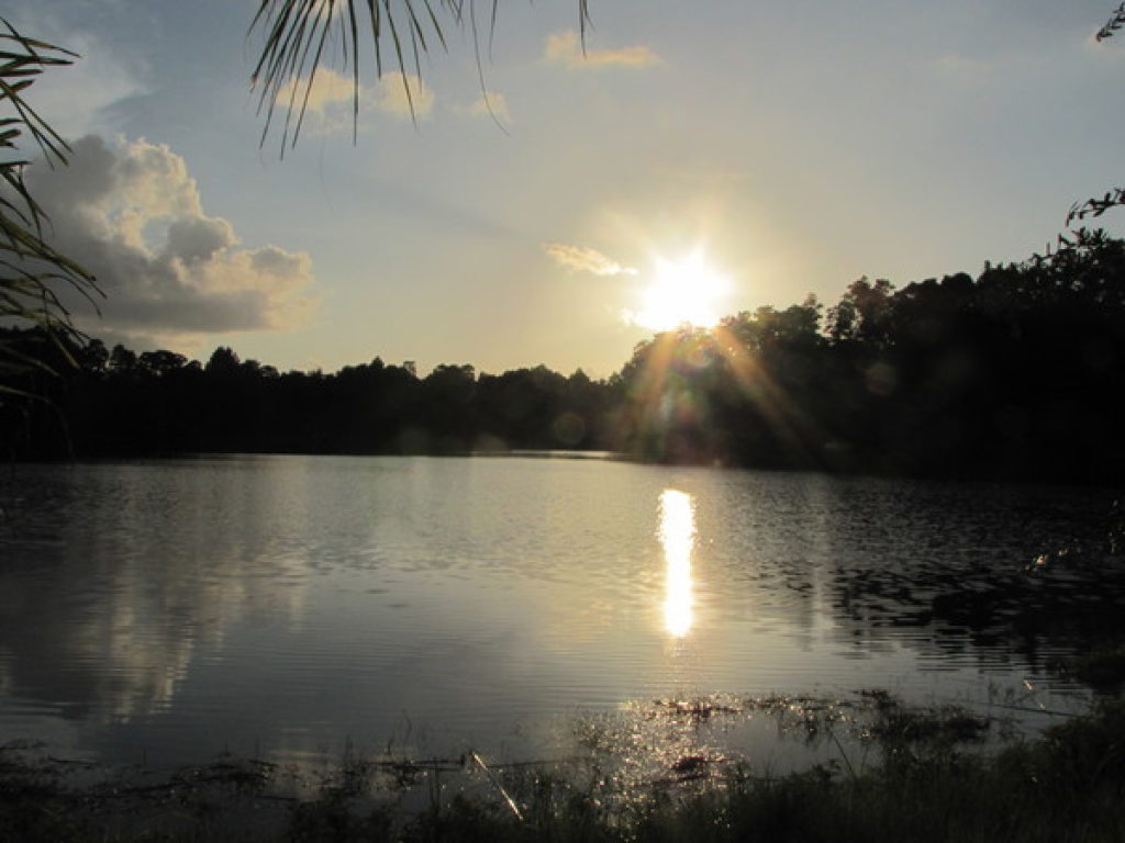 Land O Lakes Residents Can Expect A Mild Workweek As Temperatures Rise And Rain Chances Remain Low