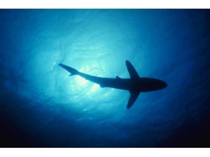 Marco Island Shark Attacks