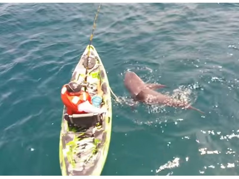 Watch Bull Shark Flips Anglers Kayak