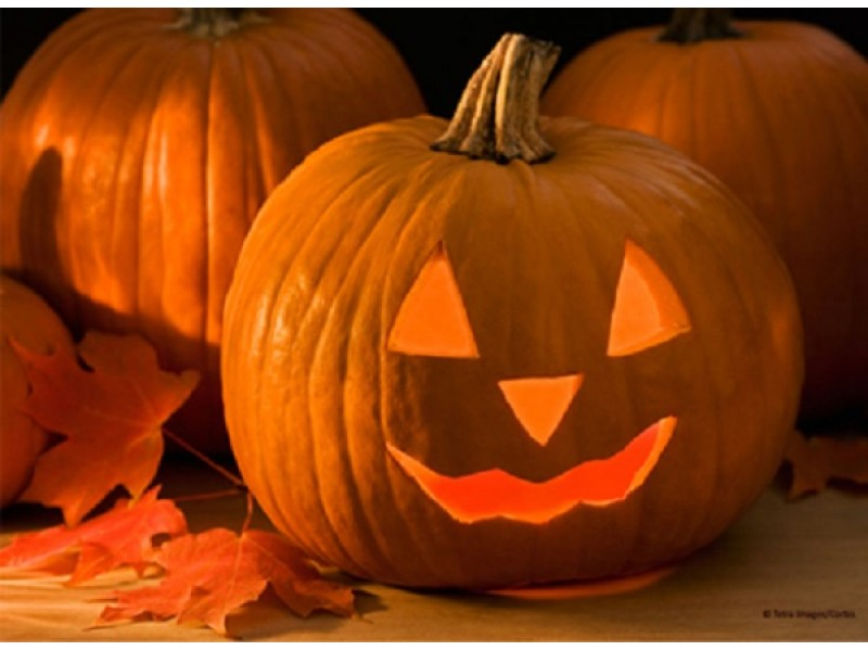 spirit halloween tampa bay store locations