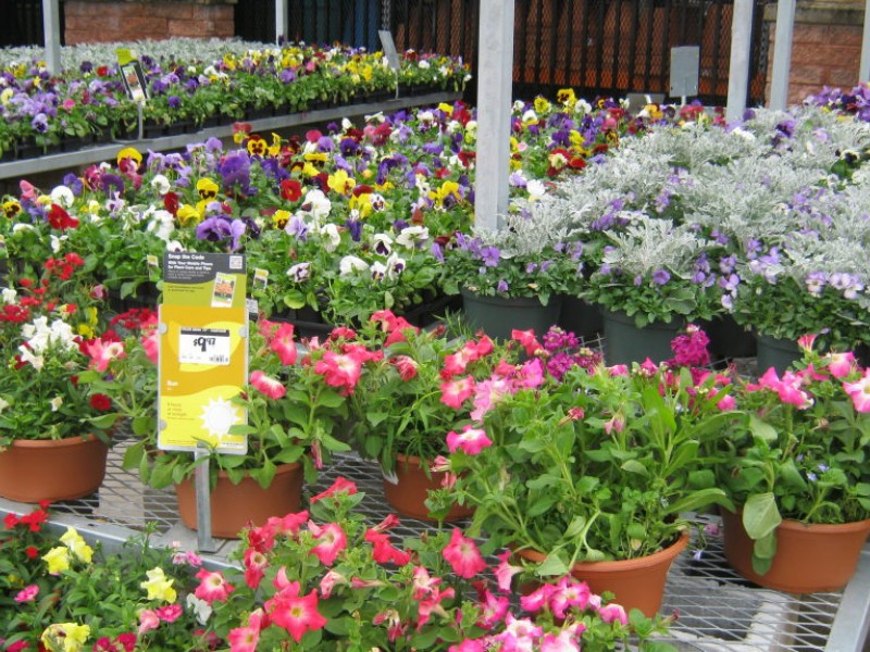Potted Plants Flowers Stolen From Home Depot Marple Newtown Pa Patch