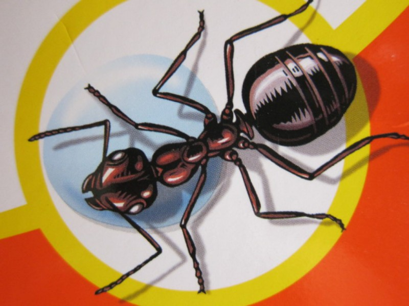 When Ants Attack: How To Get Rid Of The Summeru0027s Most Annoying Insects