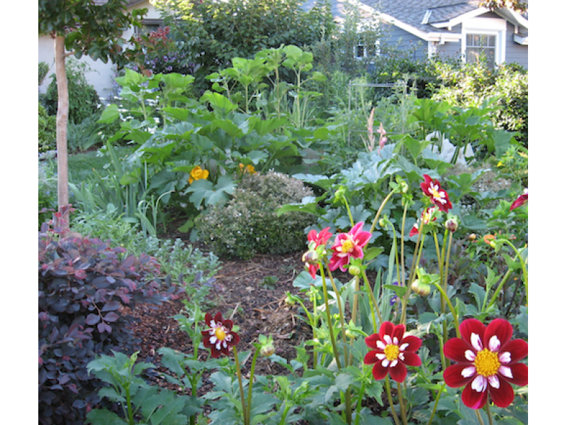 Garden Design Ideas Edible Landscaping Tour This Saturday