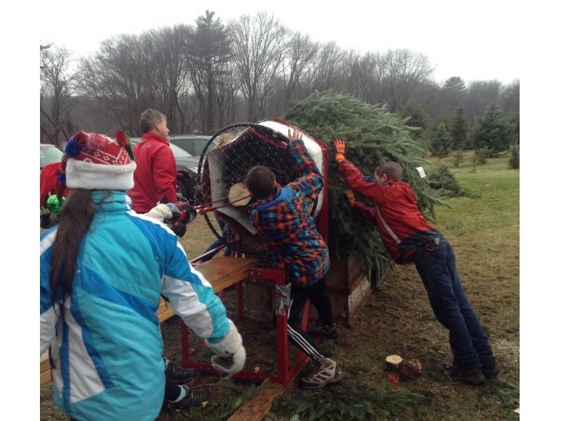Local Christmas Tree Farms In The Concord Area Concord