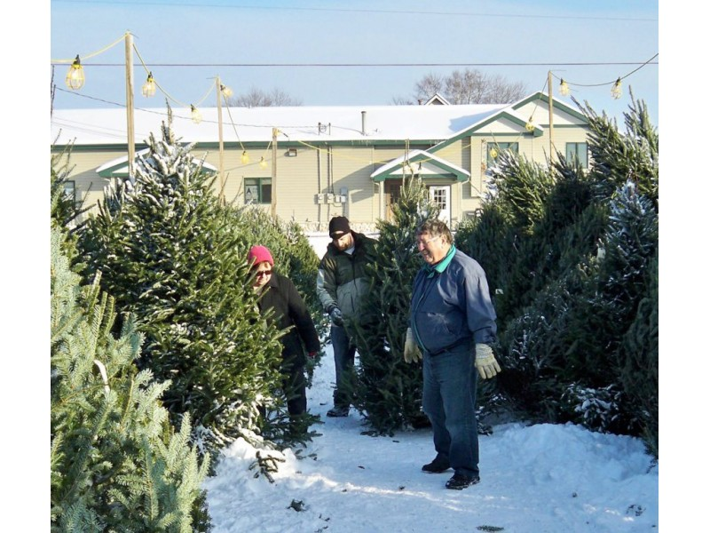 ... Christmas Trees Go On Sale Around St. Michael, Albertville Today 0 ...