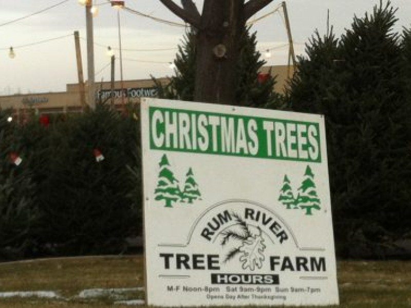 Where To Find Christmas Trees In Plymouth