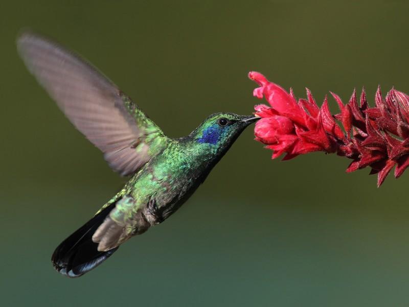 Gardening: Hummingbird Gardens