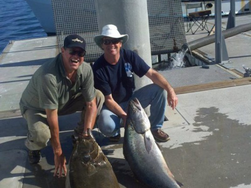 Tuna Move in Just in Time for the Fourth | Newport Beach, CA Patch