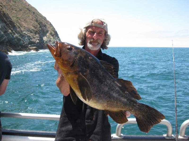 A Call For Responsible Shark Fishing Redondo Beach Ca Patch