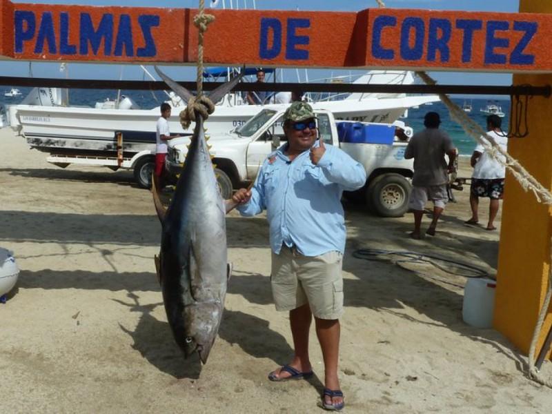 FISHING Tuna Move In Tiger Shark Caught On Light Line 0