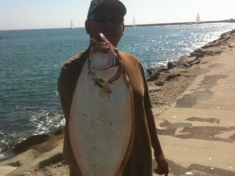 Fishing report island yellowtail and halibut in the surf for Redondo beach fishing report