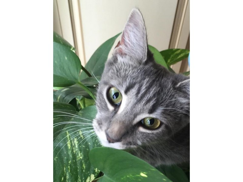 Lost Pets Of Long Island Facebook