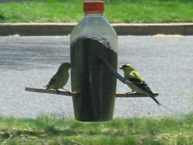 ... Attracting Birds To Your Backyard 0 ...