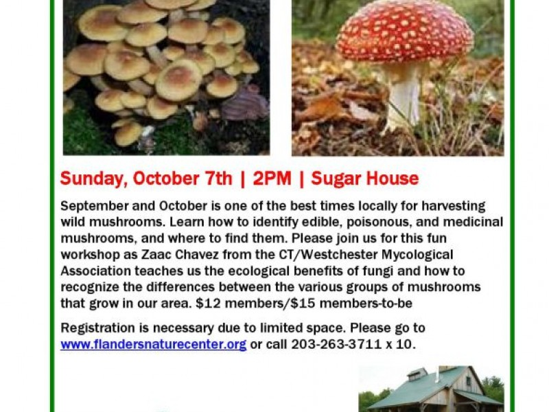 Good Identifying Wild Mushrooms With Zaac Chavez Hosted By Flanders