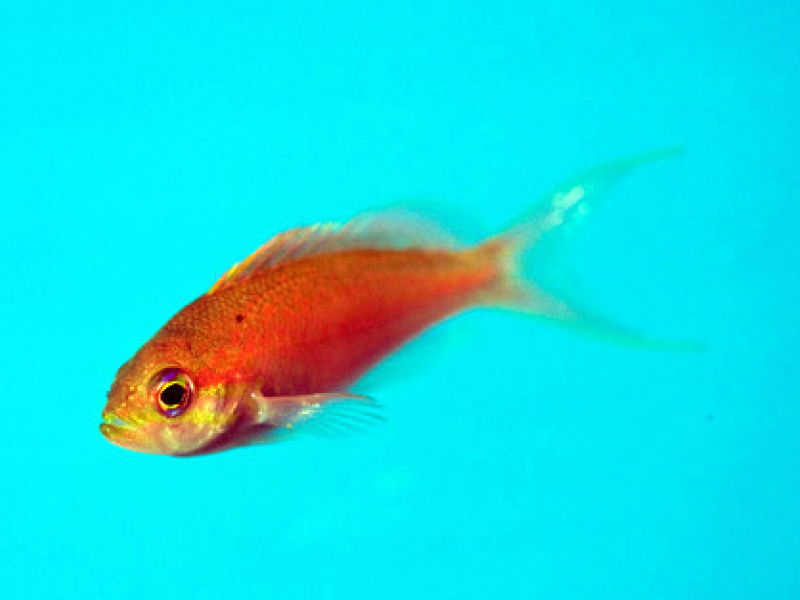 Rare Fish Found In Shallow Waters Of Shinnecock Bay