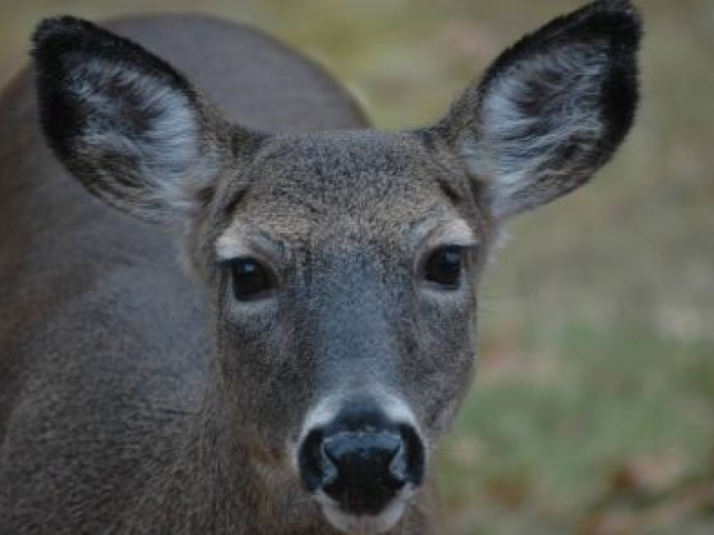 Governor Takes Steps to Loosen Restrictions for Bow and Arrow Hunting