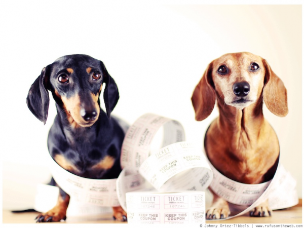 Wiener Dog Wednesday On Line Raffle Studio City Ca Patch