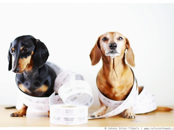 Wiener Dog Wednesday On Line Raffle Studio City Ca Patch